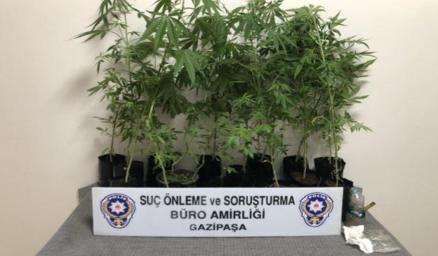 Gazipaşa'da polisten Hint keneviri operasyonu
