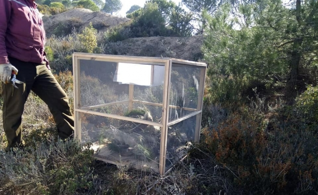 Karabiga'da çam kese böceği ile mücadele başladı