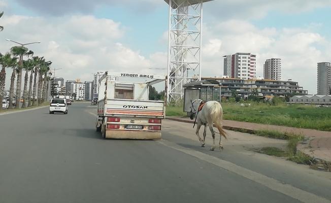 Atı kamyonet arkasına bağlayıp koşturana 1033 lira ceza