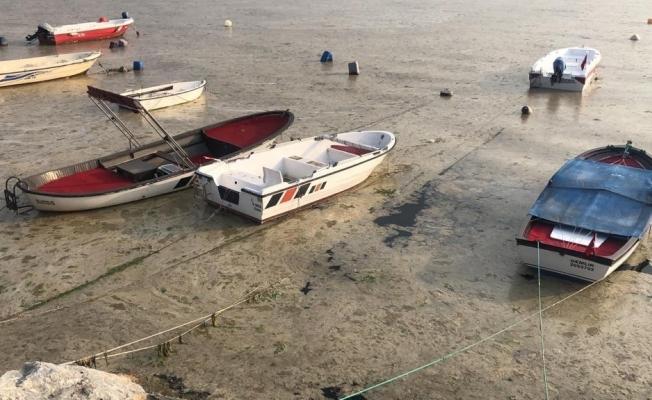Beyaza bürünen körfezde balıklar tek tek ölmeye başladı