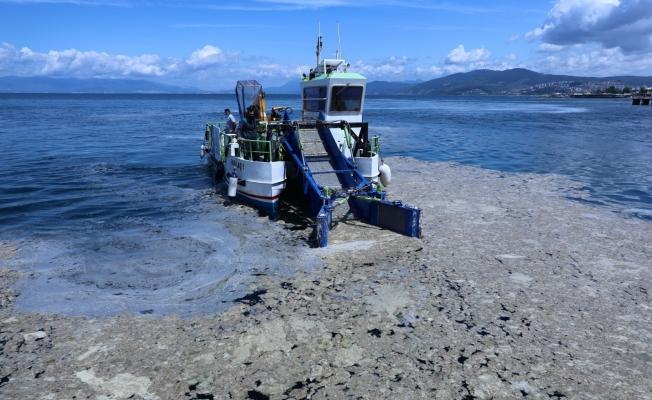 Bursa sahillerinde salya operasyonu