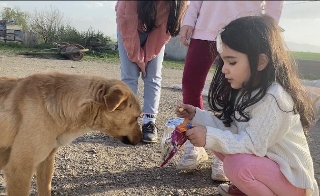 Cips yiyen köpekten sevimli hareketler