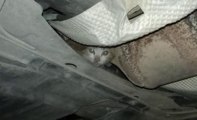 İnatçı kedi herkesi yıldırdı