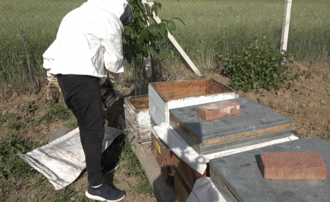 Kuraklık bal üretimini riske soktu