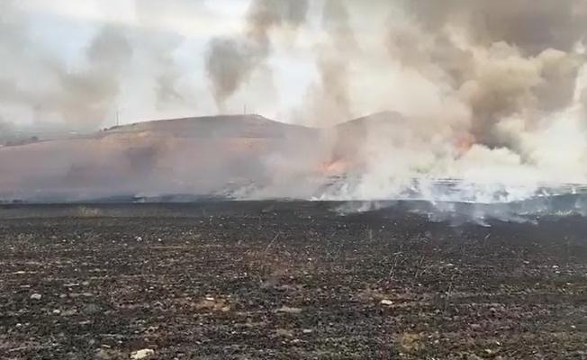 Manisa'da 250 dönüm ekili alan kül oldu