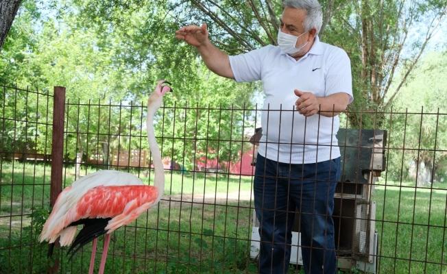 (Özel) Ayağı yanan flamingoya protez bacak yaptı
