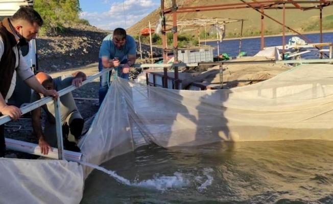 Tercanlılar kafes balıkçılığında iddialı