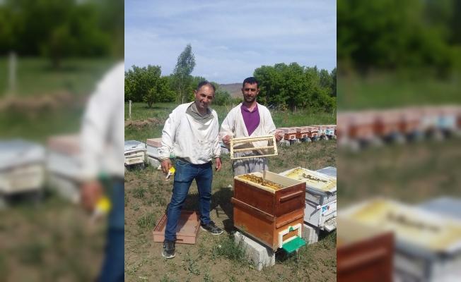 Tuzluca'da Arı sütü sağımı başladı