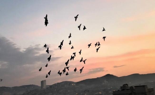 Vatandaşlar tam kapanmada zamanını damda kuşlarla geçiriyor