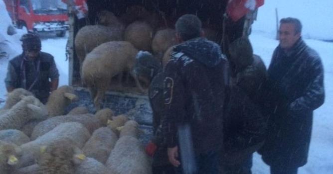Mahsur kalan hayvanları belediye kurtardı