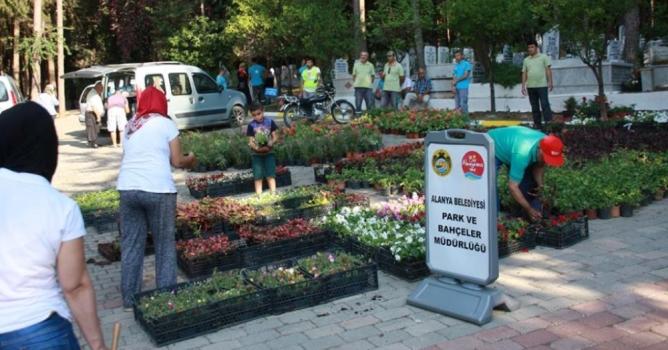 Mezarlıklarda ücretsiz  çiçek dağıtılacak