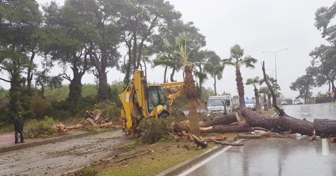 Şiddetli fırtına ağaçları söktü