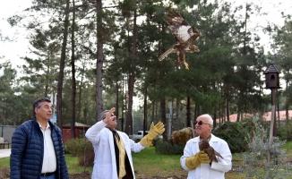 Tedavi edilen karga, baykuş ve 2 şahin doğaya salındı