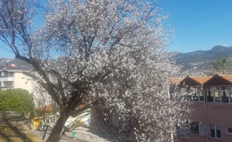 Alanya'da yalancı bahar!