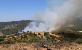 Alanya sınırındaki ormanlık alan kül oldu
