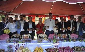 Gazipaşa 10. Çekirdeksiz Nar ve Tropikal Meyve Festivali başladı