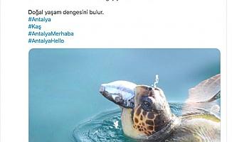 Vali Karaloğlu'ndan balon balığı yiyen caretta caretta paylaşımı