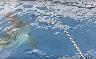 Denizde 'ay balığı' şaşkınlığı