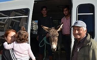 Gazipaşa'da yaylaya terk edilen eşek için seferber oldular
