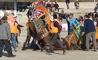 Pehlivan develer Ortaklar Arenası'nda buluştu