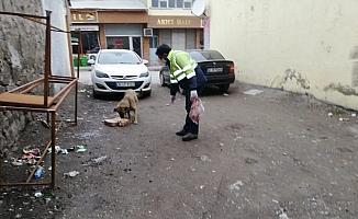 Bulanık Belediyesi sokak hayvanlarını unutmadı
