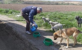 Çorlu'da sokak hayvanları unutulmuyor