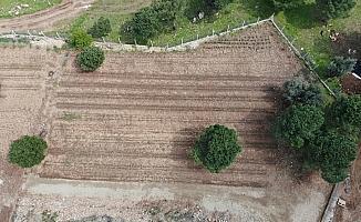 (Özel) PAÜ, BİYOM arazisinde hiçbir bitkiye zarar vermeden alt yapı çalışmasını tamamladı