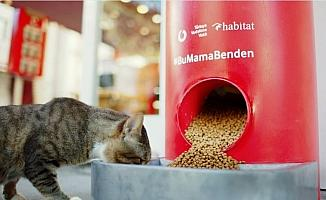 Türkiye Vodafone Vakfı'ndan 'Salgında sokak hayvanlarını unutma' çağrısı