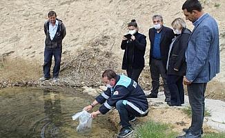 Kırklareli'de göletlere 96 bin sazan yavrusu bırakıldı