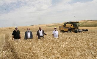 Silvan'da sosyal mesafeli arpa hasadı yapıldı