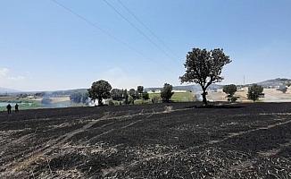 Elektrik telleri koptu, ormanlık alanda yangın çıktı