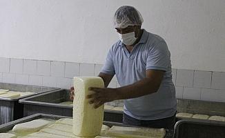 Manyas'ta Kelle peynirine coğrafi işaret sevinci