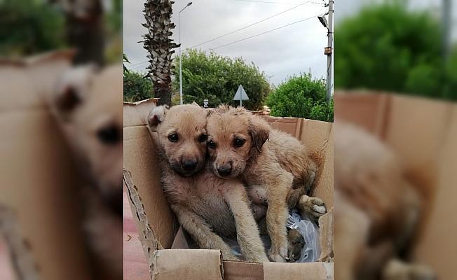 Kanala düşen yavru köpeklerin yardımına itfaiye koştu