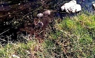 Edremit'te itfaiye ekiplerinin kaplumbağa operasyonu