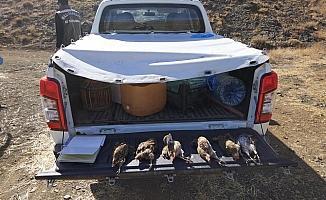 Yasağı hiçe sayan avcılara ceza yağdı