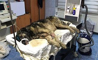Su kuyusuna düşen köpeği belediye ekipleri kurtardı