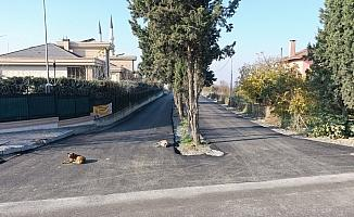 Yılın son asfalt çalışması Moda Caddesi'nde yapıldı