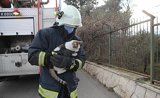Ağaçta saatlerce mahsur kalan kedi kurtarılınca mama kavanozuna saldırdı