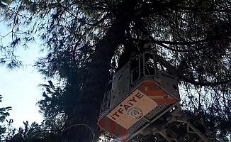 Köpekten korkup çıktığı ağaçtan itfaiye indirdi
