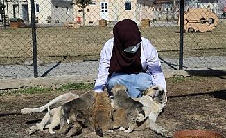 Annesiz kalan 7 yavru köpeği başka bir anne köpek sahiplendi
