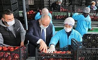 """Başkan Öztürk; """"Elma üreticilerinin sorunlarını çözmek istiyoruz"""""""