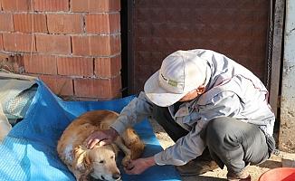 Gazipaşa'da köpeğinin vurulduğunu veterinere götürünce anladı