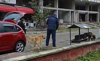 Ordulu çift sokak hayvanlarına duyarsız kalmadı