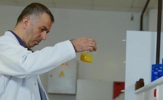 Propolisin etkinliği zeytin yaprağı ve bor ile arttırılıyor