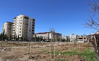 Yeni mahalleye 'Mahalle Bahçesi' yapıldı