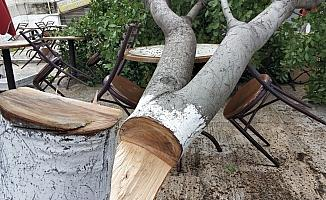 Çay ocağı işletmecisi bahçesindeki ağaç kesilince şikayetçi oldu