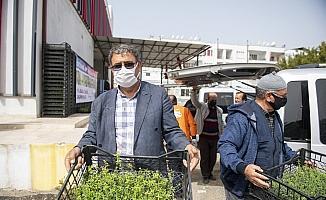 Mersin'de üreticilere kantaron fidesi dağıtıldı