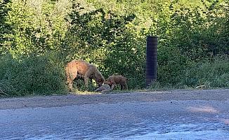 Anne köpek ölen yavrusunu yol kenarına taşıdı
