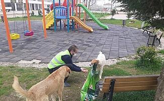 Fatsa Belediyesi can dostları unutmuyor