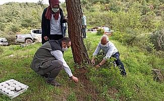 Kestane ağaçlarına zarar veren Gal arılarına karşı biyolojik mücadele